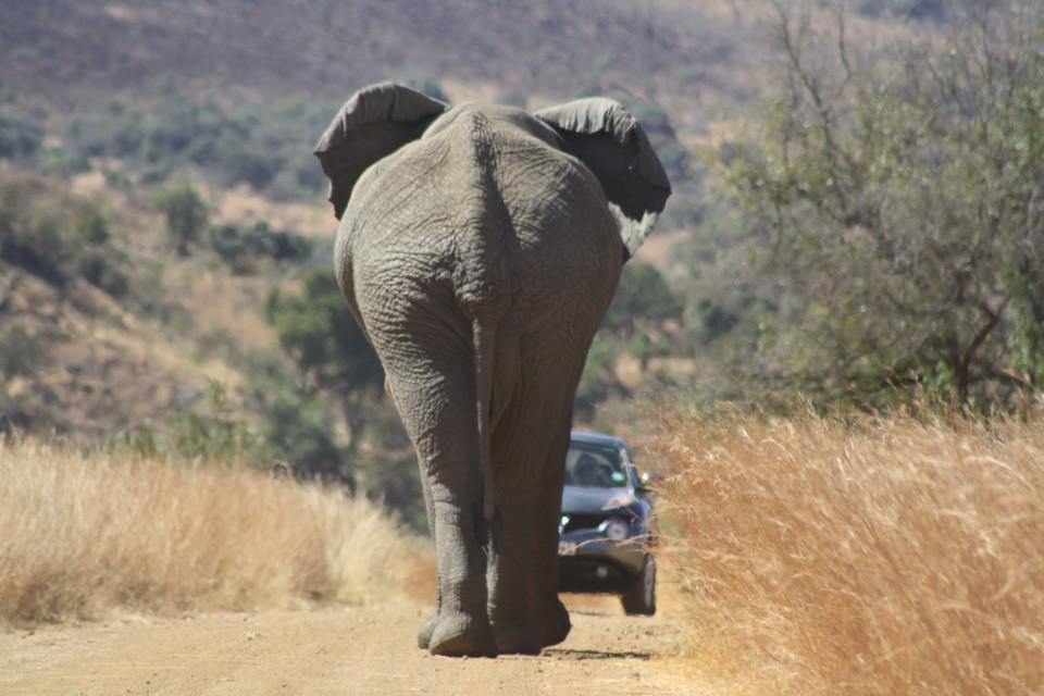Elephant with quote